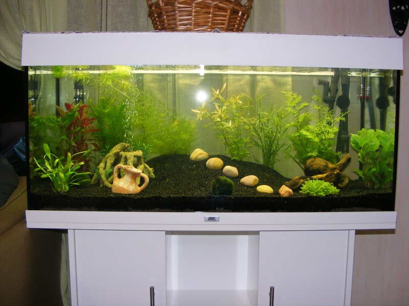 projet aquarium juwel rio 180 litres de natibou. Black Bedroom Furniture Sets. Home Design Ideas