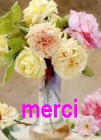merci210.jpg